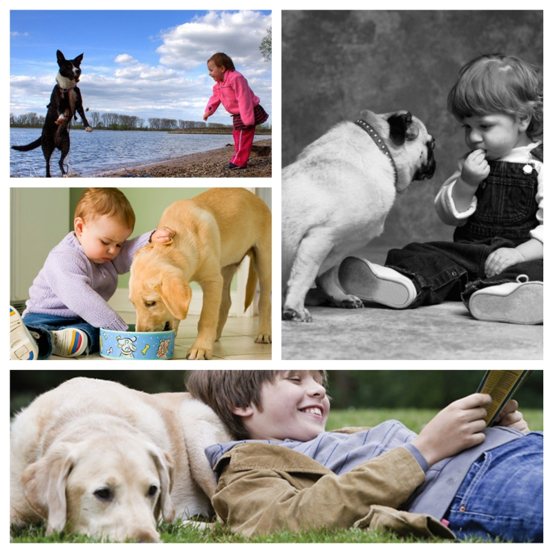 Choosing the best dog for kids