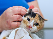 Emergencies for Baby Cats