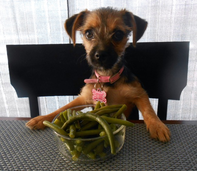 Green beans for Dog