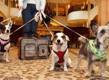 How to Manage your Multi-Pet Households