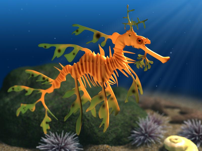 leafy seadragon sea water creature