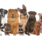 Popular-Dog-Breeds