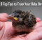 6 top tips to train your baby bird