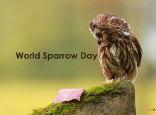 World-Sparrow-Day1