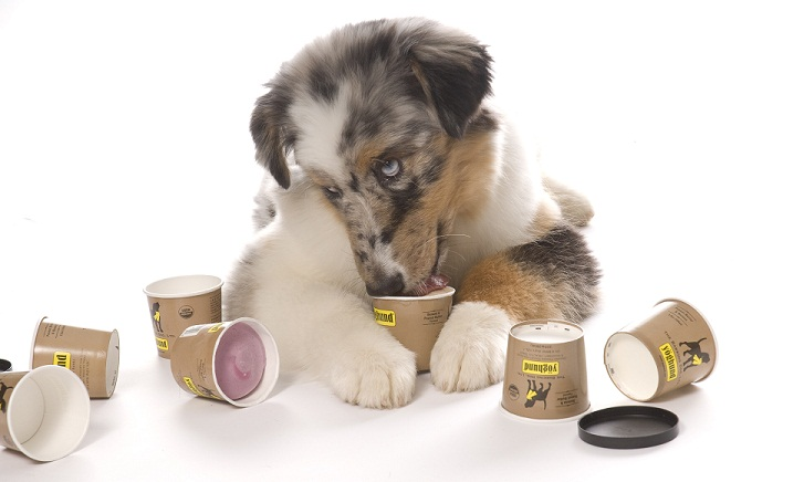 Yogurt for Dog
