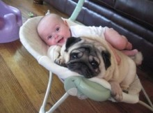 dogs and babies playing together video
