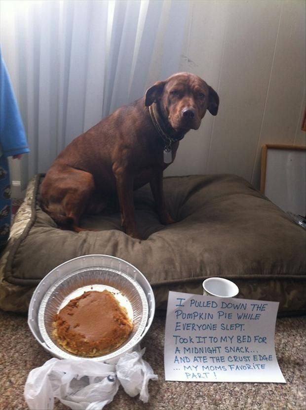 Funny dog shaming pcitures