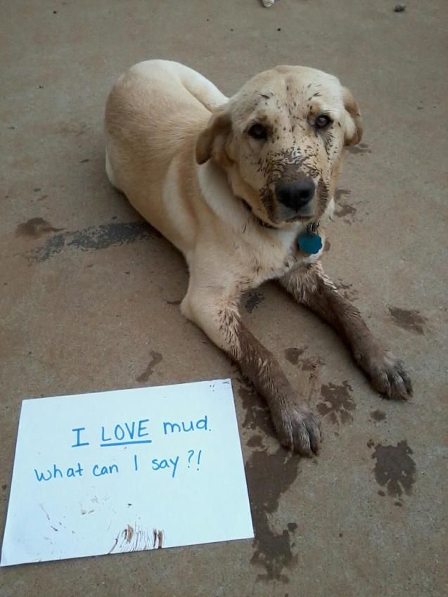 Dog shaming in mud