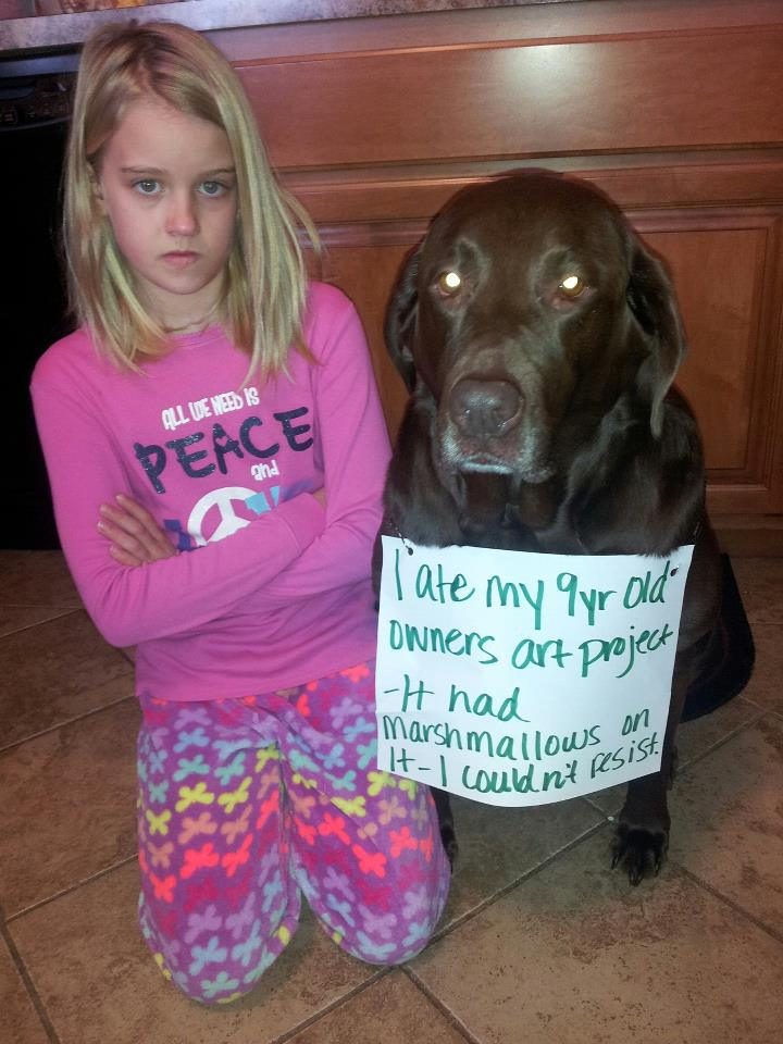 Lab dog shaming