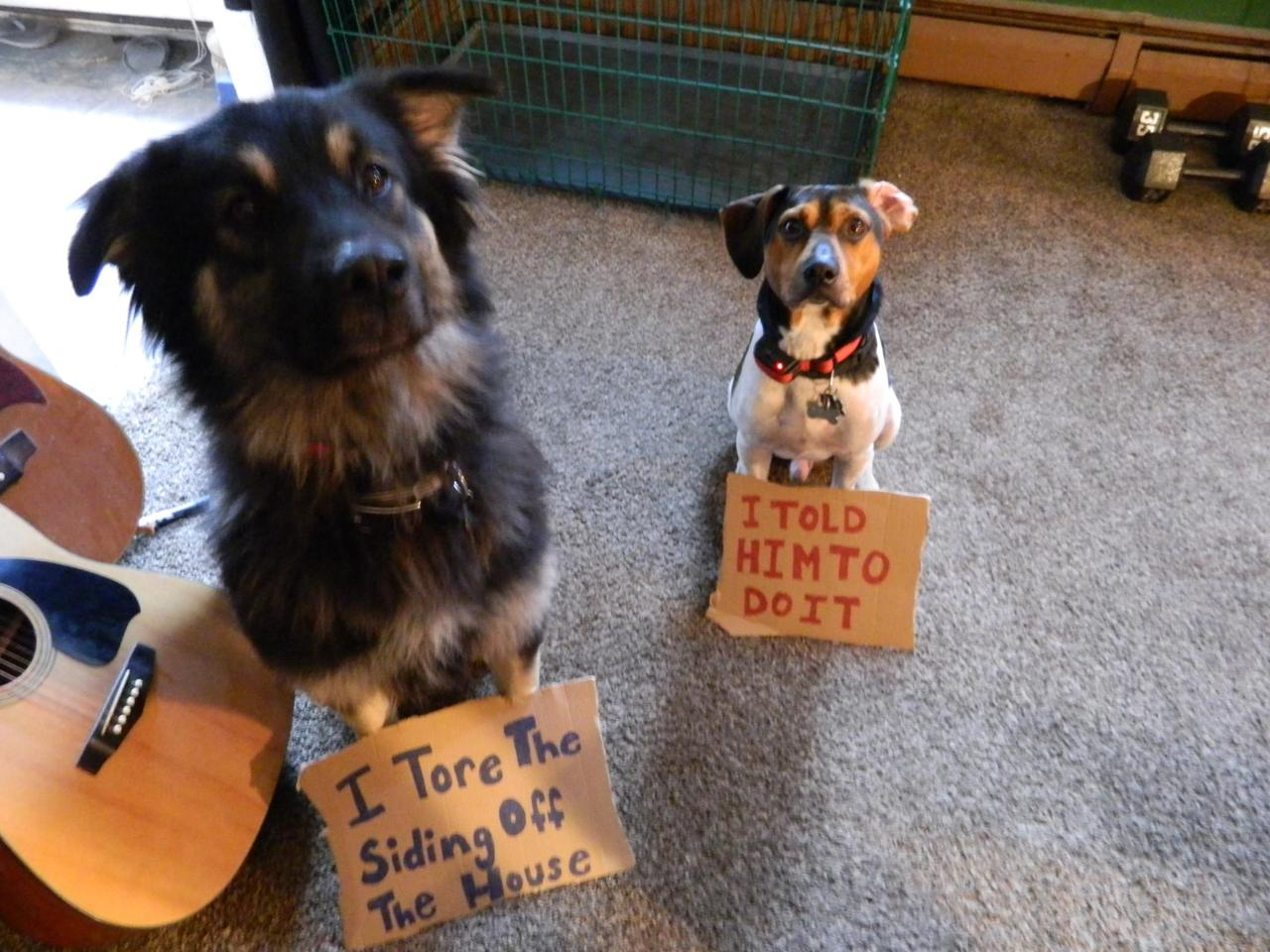 Funny dogs shaming