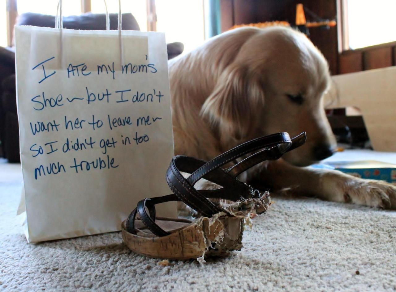 Dog Shaming Shoes