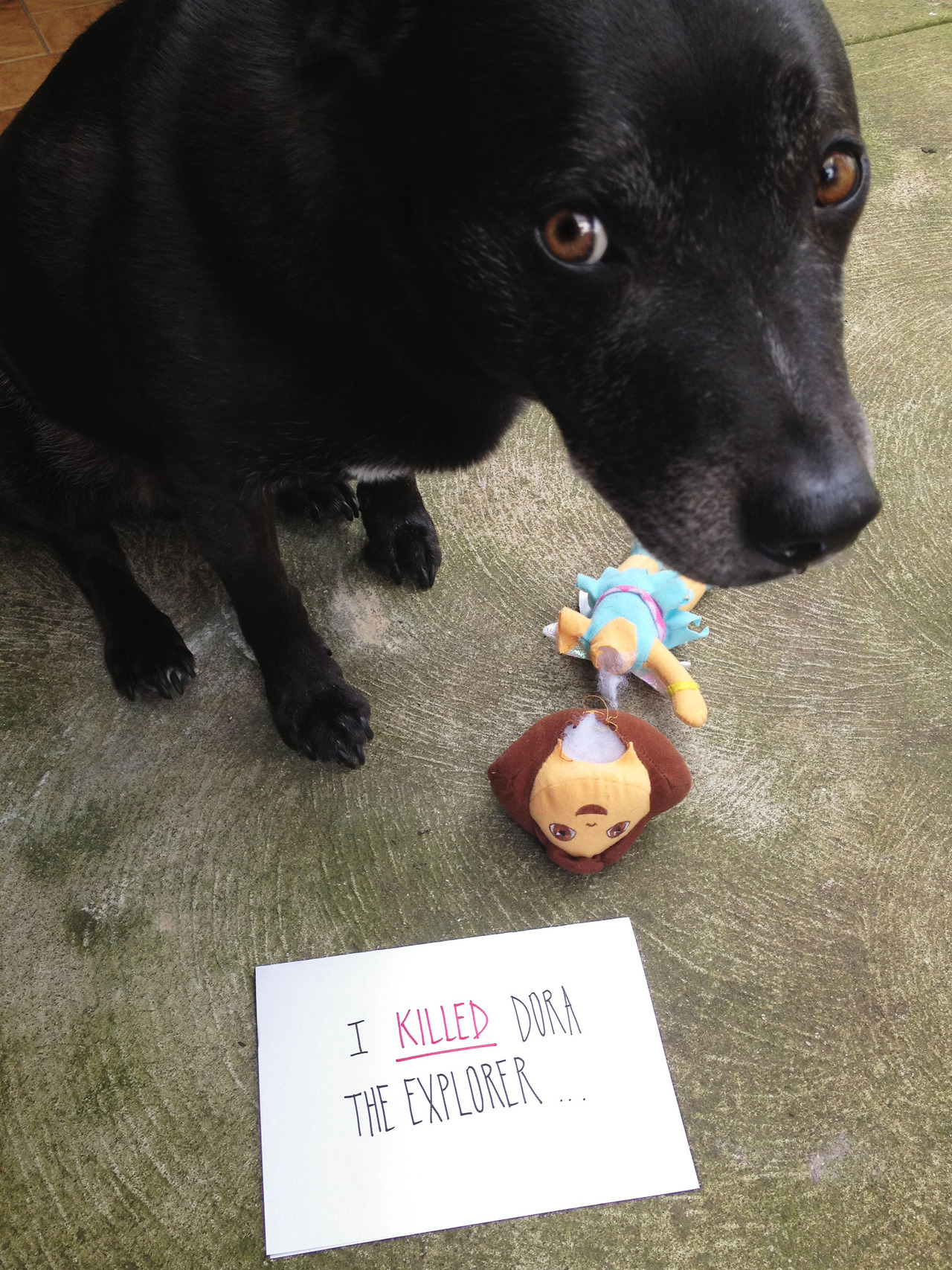 Dogs shaming funny pics