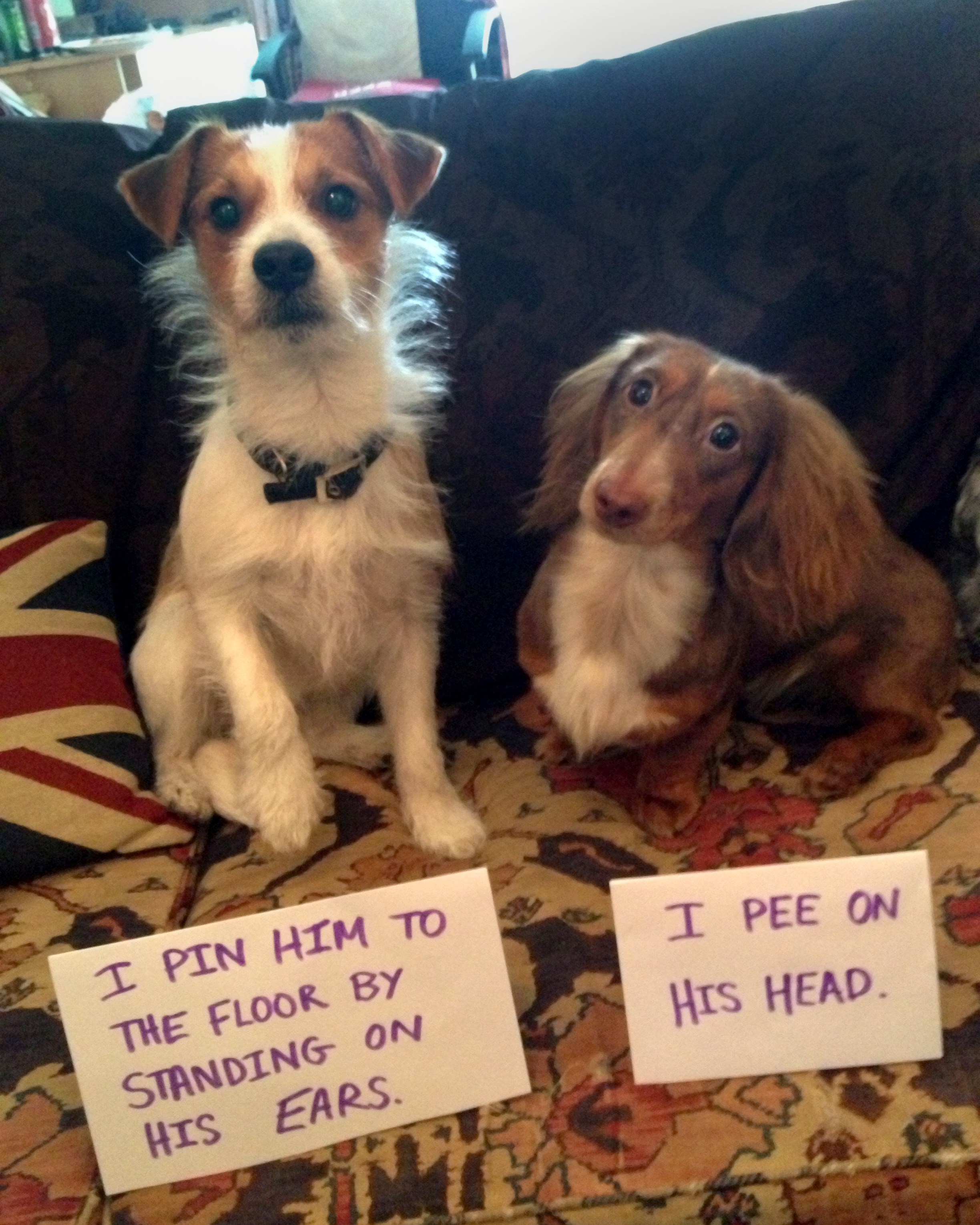 dogs shaming fun