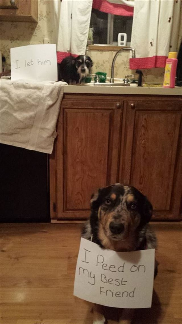 Funny cute dogs shaming
