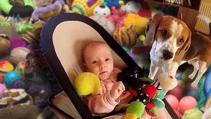 guilty dog charlie apologizes baby for stealing her toy