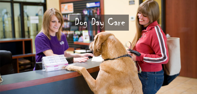 Dog-Day-Care-Tips
