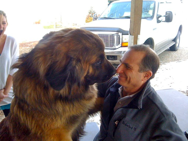 Leonberger biggest dogs in the world