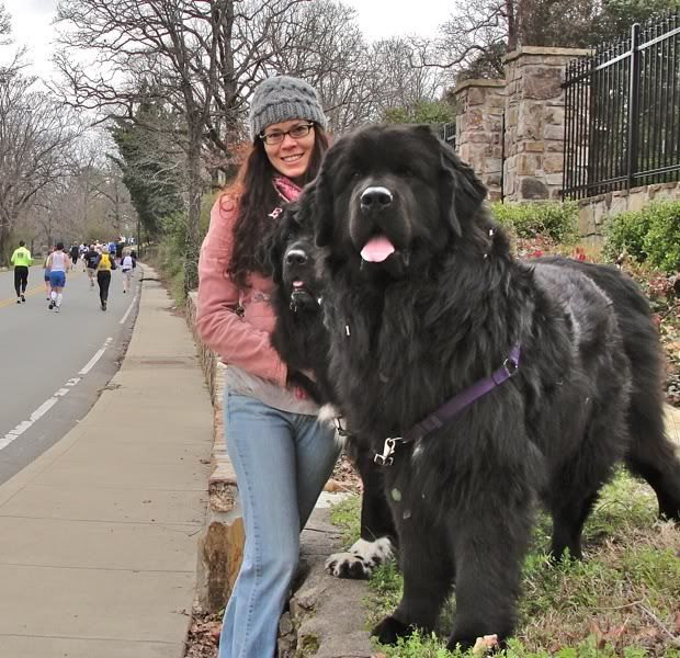 Newfoundland biggest dog