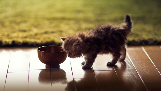 Cat's bowl should be of clean and cold water