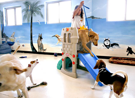 dog day care play area and setup