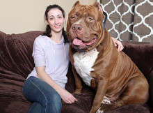 biggest guard dogs in the world