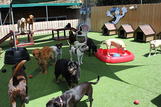 choosing the right dog day care