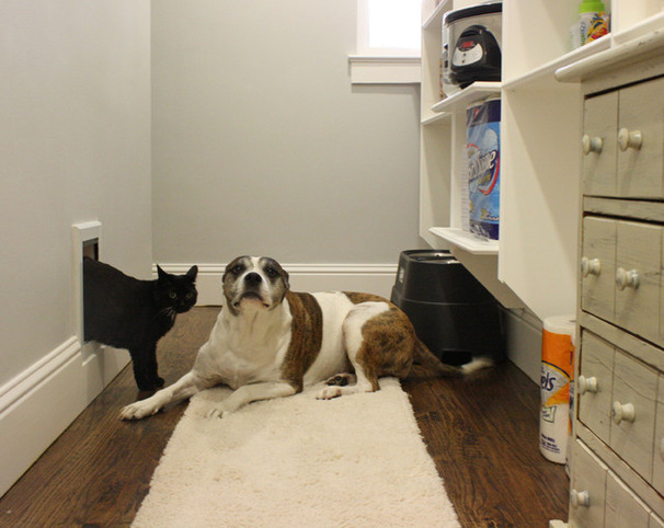 single room pet Boarding