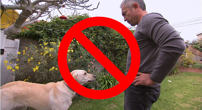 Avoid-Eye-Contact-against-a-dog-attack