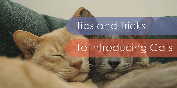 Tips-and-Tricks-to-Introducing-Cats
