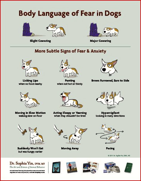 body language of fear in dogs-infographics