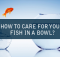 HOW TO CARE FOR YOUR FISH IN A BOWL?
