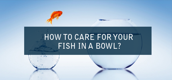 HOW-TO-CARE-FOR-YOUR-FISH-IN-A-BOWL