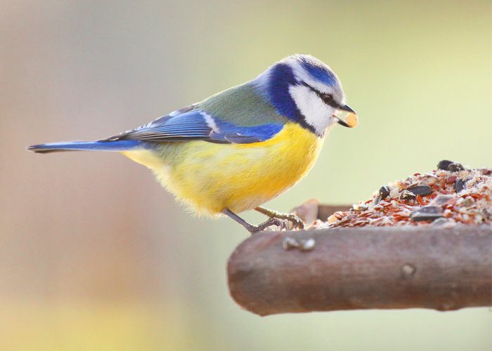 Nourishing Food for your Bird