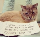 silly cat shaming photos