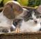 Home-Tips-for-your-New-Pet