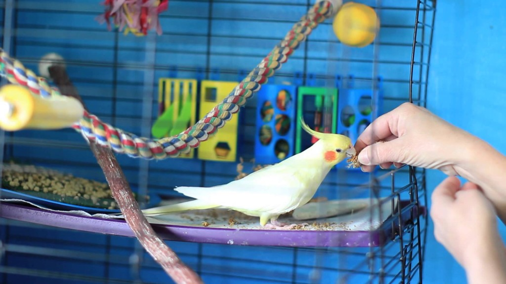 bird care tips and training