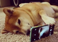 dog taking selfie photograph