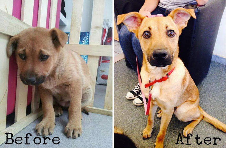 adpoted dog before and after rescue