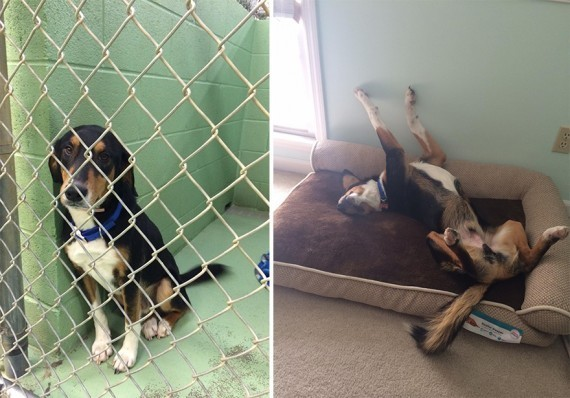 dog better and after adoption picture