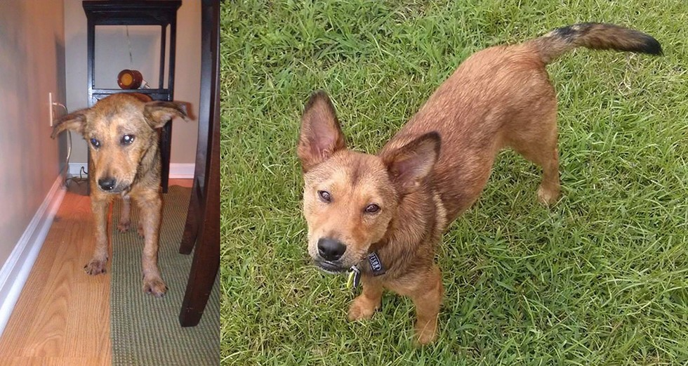 dog pictures before and after adoption