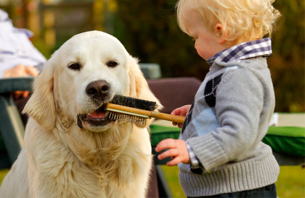 dogs-and-children-grooming