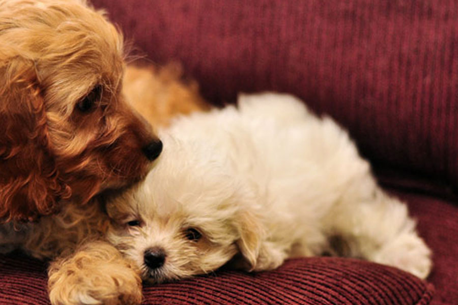 adorable cute puppies photo