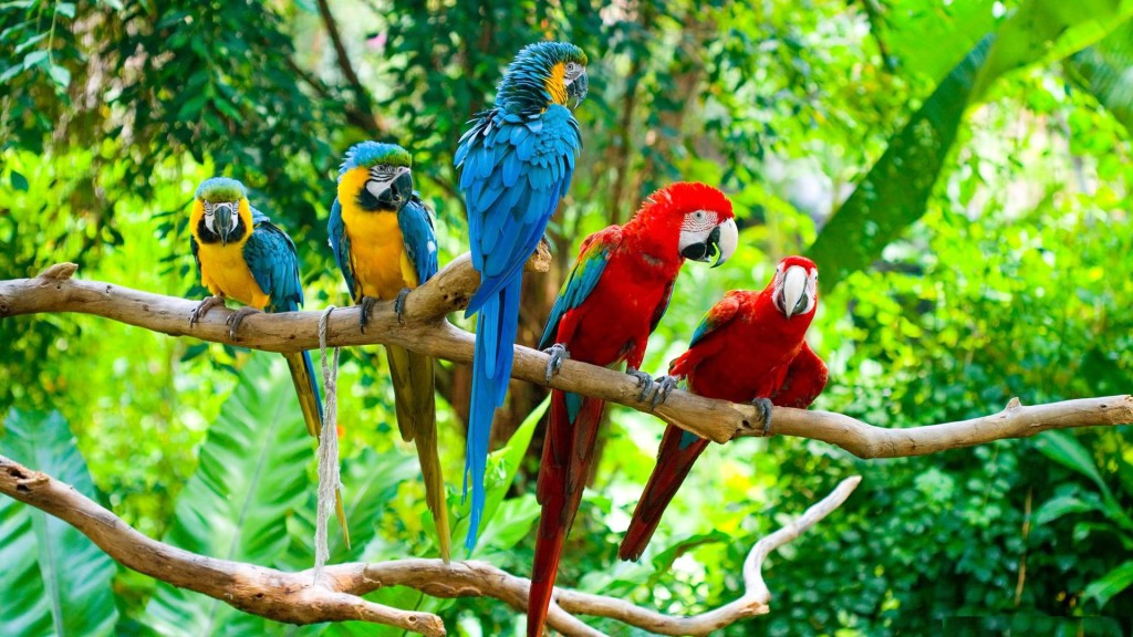 Top 10 Best Kind Of Pet Parrots - amazon parrots