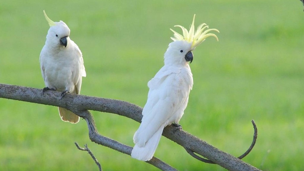 top 10 parrots in the world
