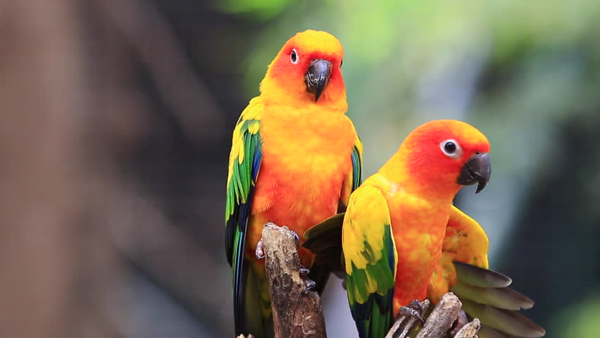 Top 10 Best Kind Of Parrots - images and stills