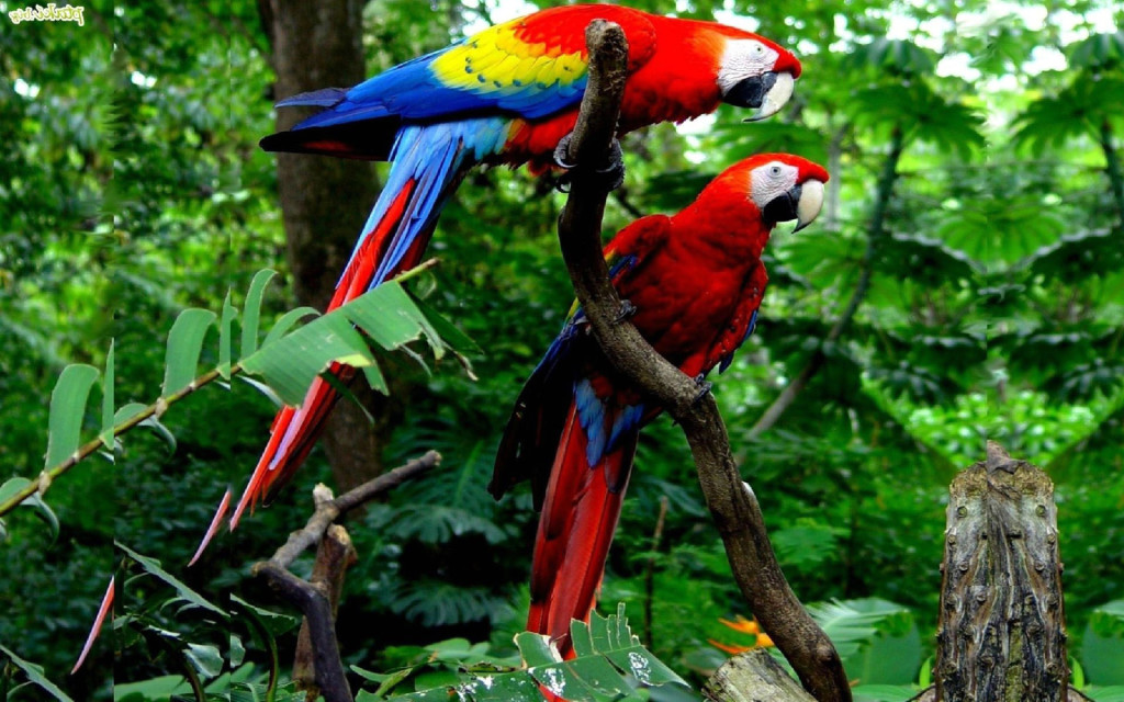 Top 10 Best Kind Of Pet Parrots - macaws
