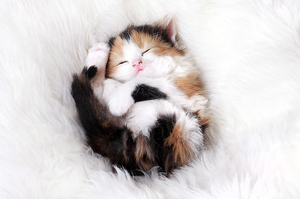 kitten Sleeping Arrangements tips