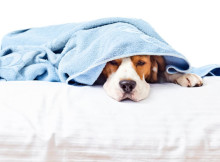Dog Natural Cure Digestive Problems