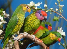 top 10 best kinds of Parrots - Just 4 Pet Care