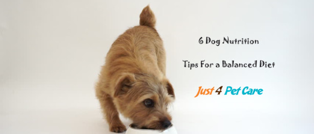 6 Dog Nutrition Tips For a Balanced Diet